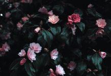 Rośliny na ścianie - jak stworzyć żywe obrazy?